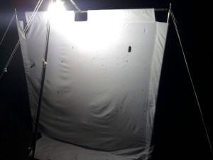 Het lokken van nachtvlinders kan behulp van een felle lamp. Op het witte doek zijn de nachtvlinders goed zichtbaar
