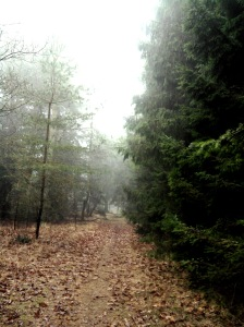 Plaats delict; zoeken naar de Dwerguil in bosgebied Oostermaet bij Lettele