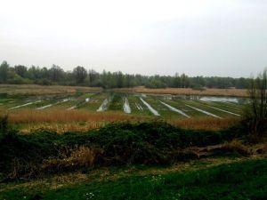 De Lepelaarplassen, Trekvogelgraslandje