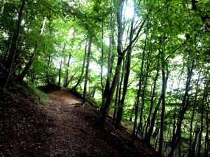 Een bos met reliëf
