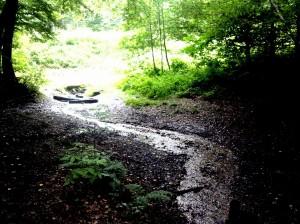 Één van de beekjes die door het Bunderbos meandert. Een veelvuldig bezochte plek door mensen, een vaste verblijfplaats voor zeldzame  flora- en fauna