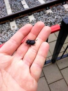 Geluk bij een ongeluk: Klein Vliegend Hert ter compensatie van het missen van de trein naar Maastricht